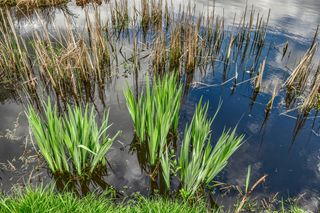 Pond-hdr